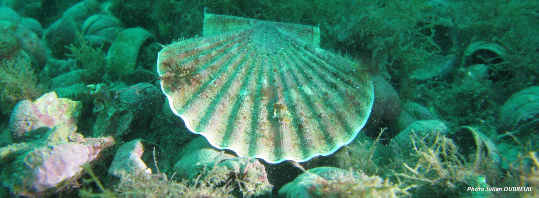 coquille sous-marine